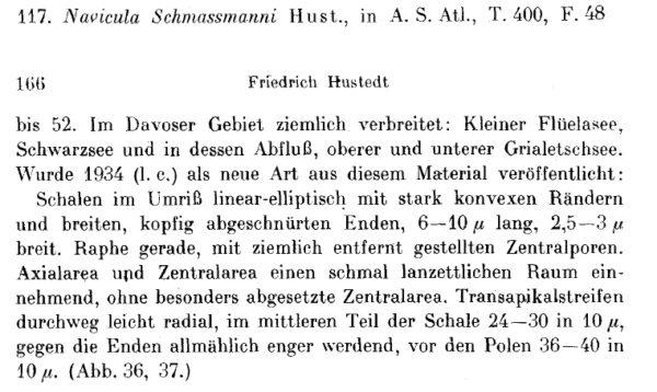 N Schmassmani Origdes