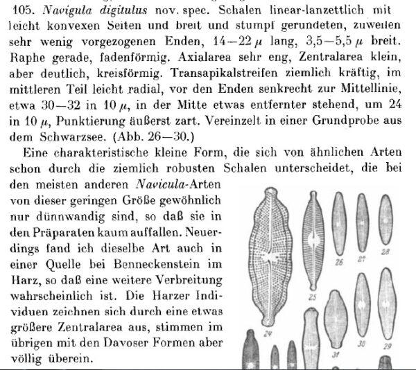 Navicula Digitulus Orig Desc