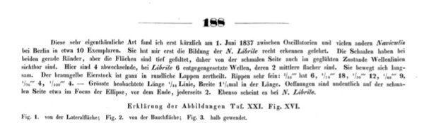 Navicula Undulata Ehrenb Orig Desc 1