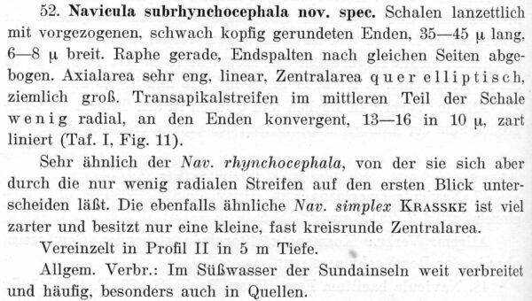 Navicula Subrhynchocephala  Descr