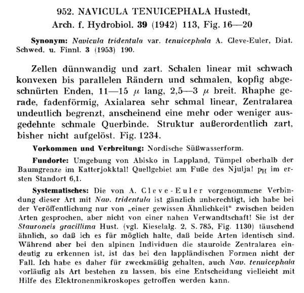 Naviculatenuicephala Origdesc001