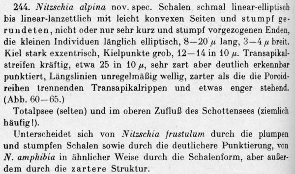 Nitzschia Alpina  Descr