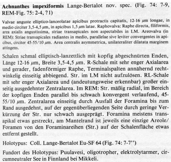 Or Descr  Achnimpexiformis