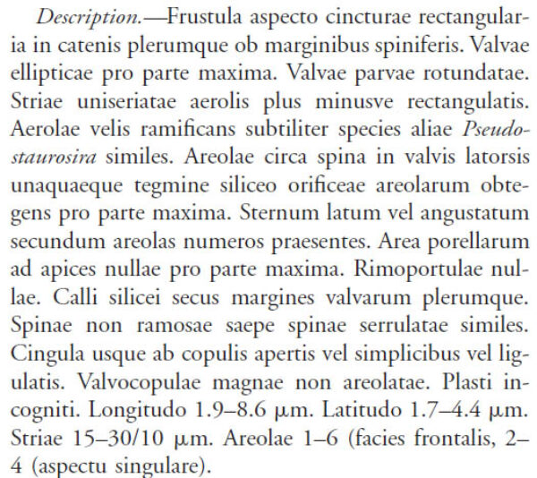 Cymbopleura angustata LM4
