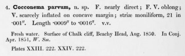 Page76  Smith1853  Cocconema Parvum  Smith1853