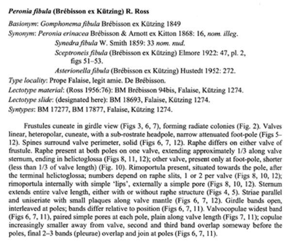 Peronia Fibula Origdesc0011