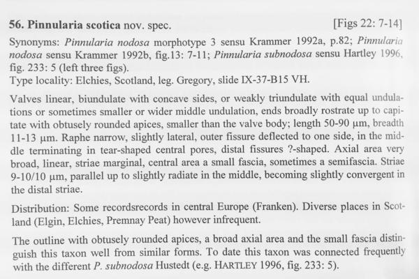 Pinnularia Scotica Orig Desc
