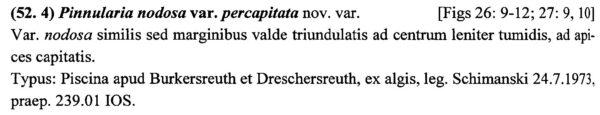 Pinnularia Nodosa Percapitata Origdesc1001