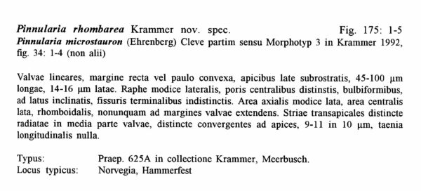 Pinnularia Rhombarea Origdesc1001