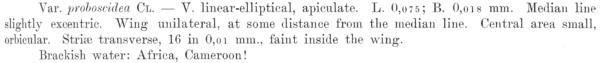 Plagiotropis Proboscidea  Orig Descr