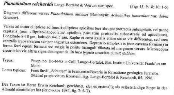 Planothidium Reichardtii Orig Desc