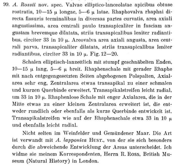 Psammothidium Rossii Orig Desc