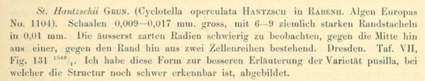 Sthantzschii Original Description