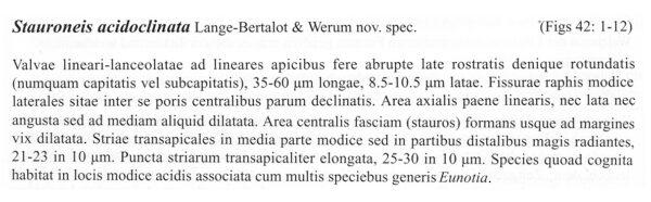 Sacidoclinata Origdesc