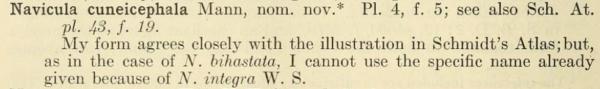 Navicula cuneicephala orig descr