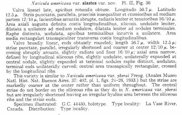 Sellaphora Alastos Origdesc001