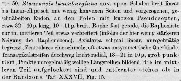 Stauroneis Lauenburgiana  Orig Descr
