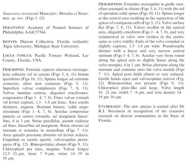 Staurosira Stevensonii Original Description