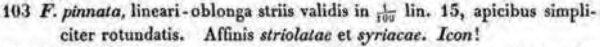Staurosirella Pinnata  Original Description
