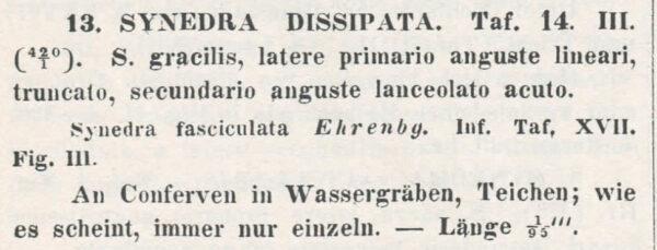 Synedra Dissipata  Kutz 1844