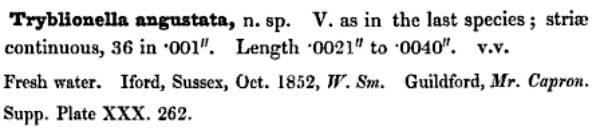 T Angustata Original Description