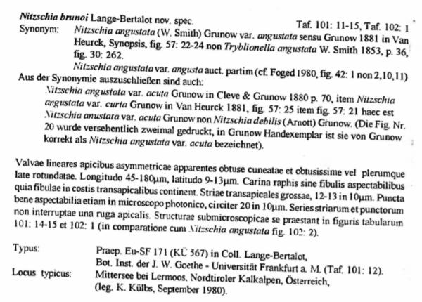 Tryblionella Brunoi Orig Desc