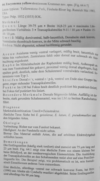 Encyonema Yellowstonianum Orig Text
