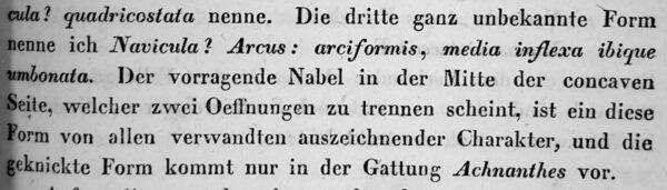 Navicula Arcus Orig Desc Text