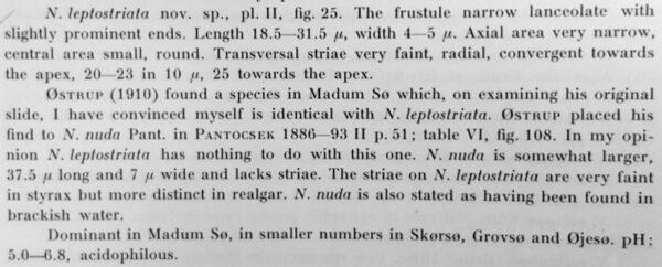 Navicula Leptostriata Orig Desc Text