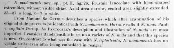 Navicula Madumensis Orig Desc Text