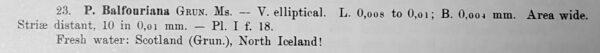 Pinnularia Balfouriana Orig Desc Text