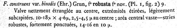 Pseudostaurosira Robusta  Fusey  Text 1951