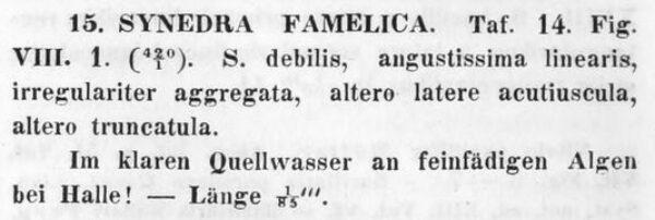 Synedra Famelica Orig Text