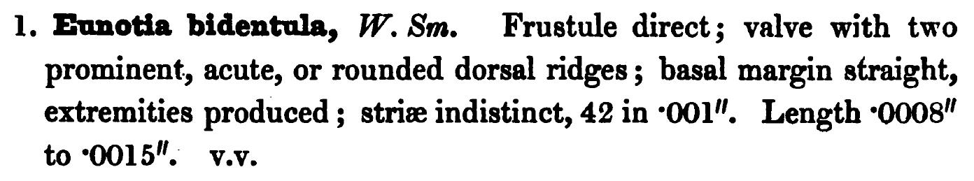 Eunotia Bidentula Orig Desc Text
