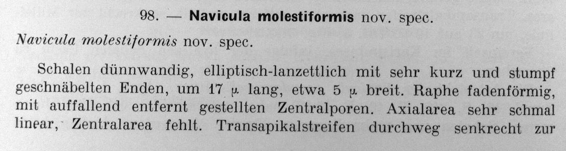 Molestiformis1