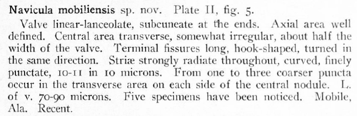 Navicula Mobiliensis Orig Desc Text