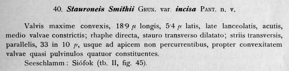 Stauroneis Smithii Var Incisa Orig Desc Text