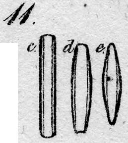 Navicula aponica var. brachysira orig illus