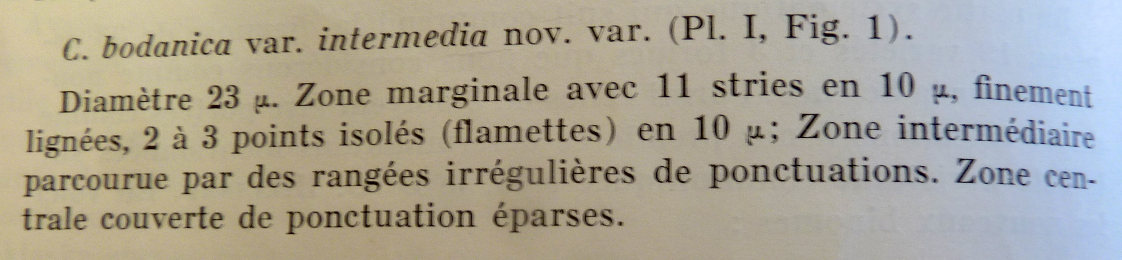 Cyclotella bodanica var. Intermedia orig desc