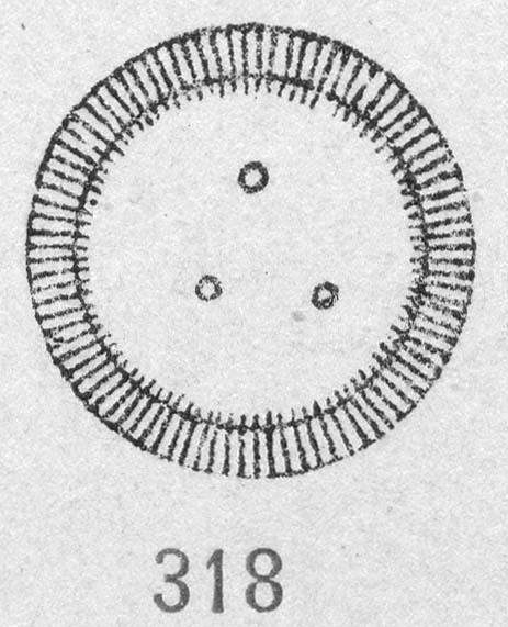 Cyclotella ocellata orig illus