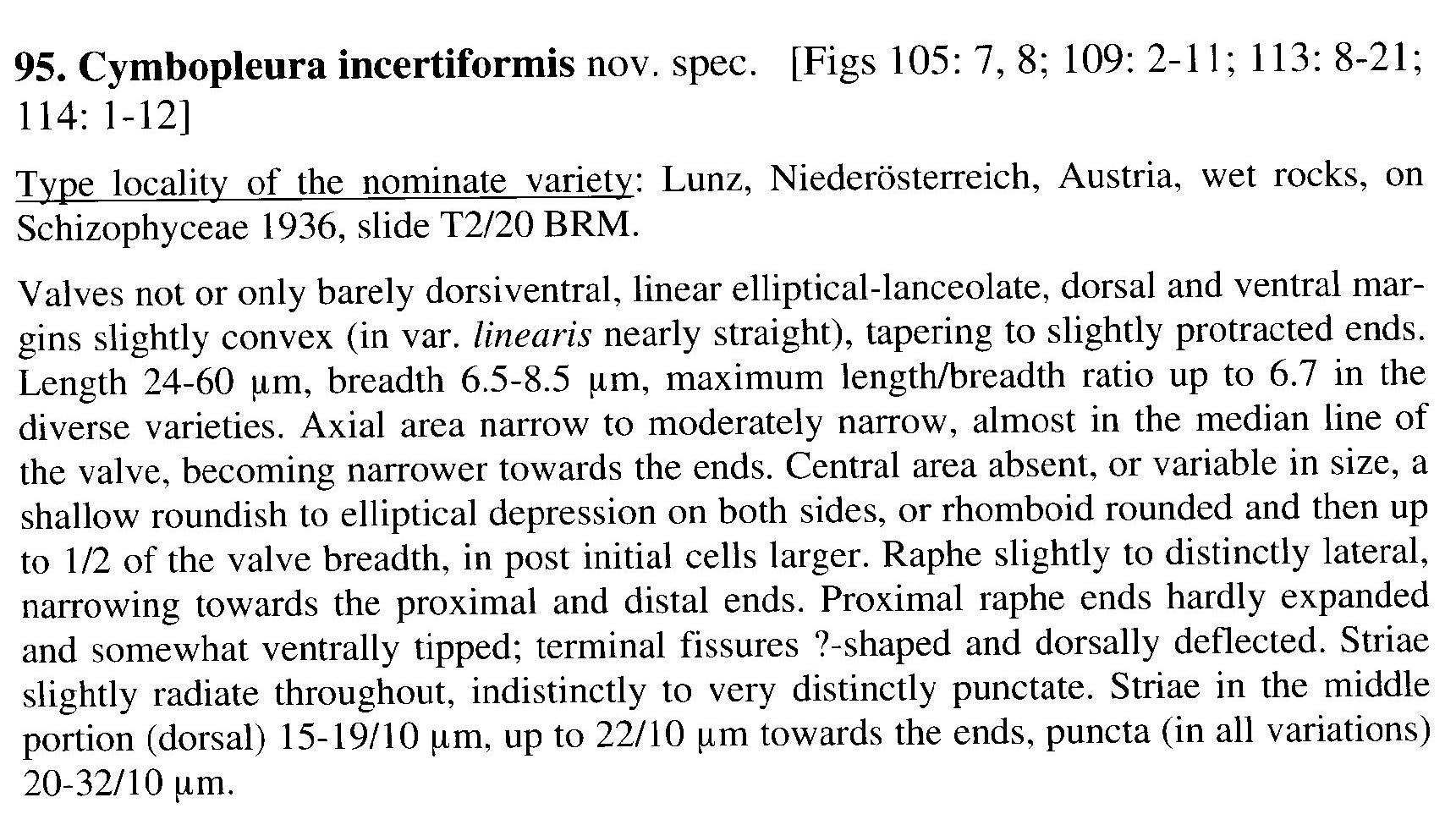 Cymbopleura incertiformis orig desc