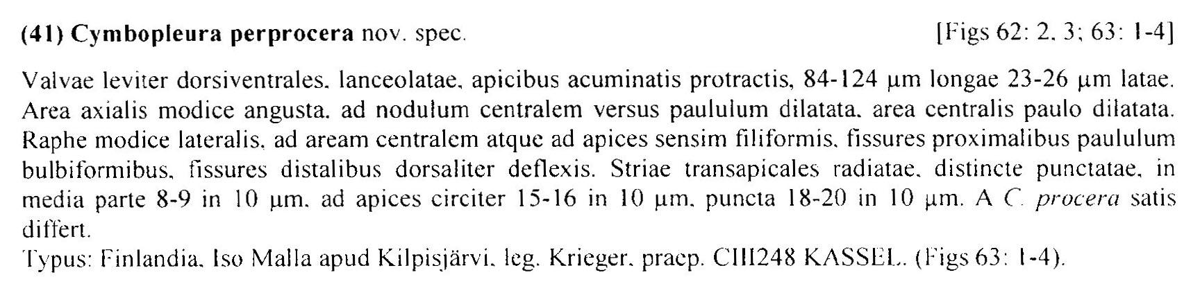 Cymbopleura perprocera orig desc