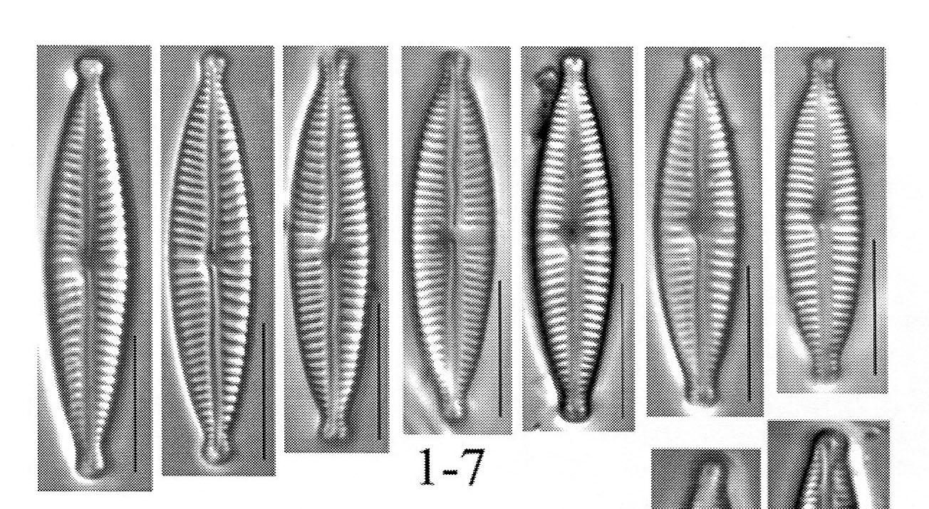 Encyo Aequaliformis Origimag001 Cropped