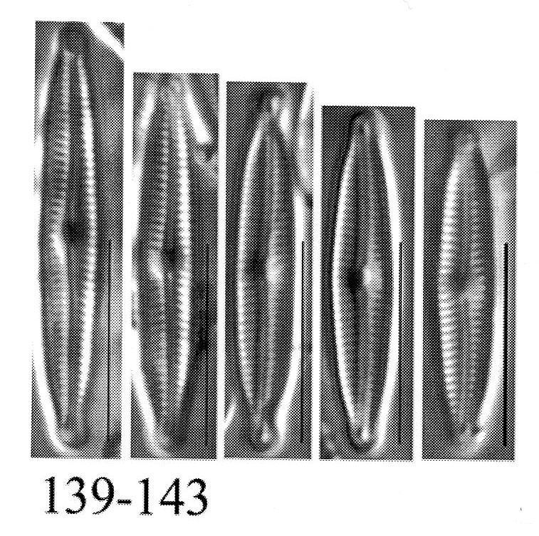 Encyonopsis kutenaiorum orig illus