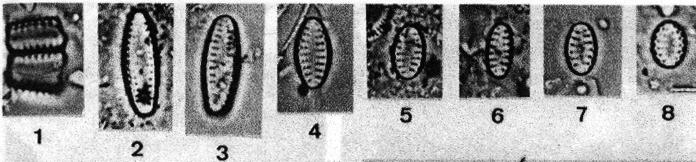 Iconotype 1