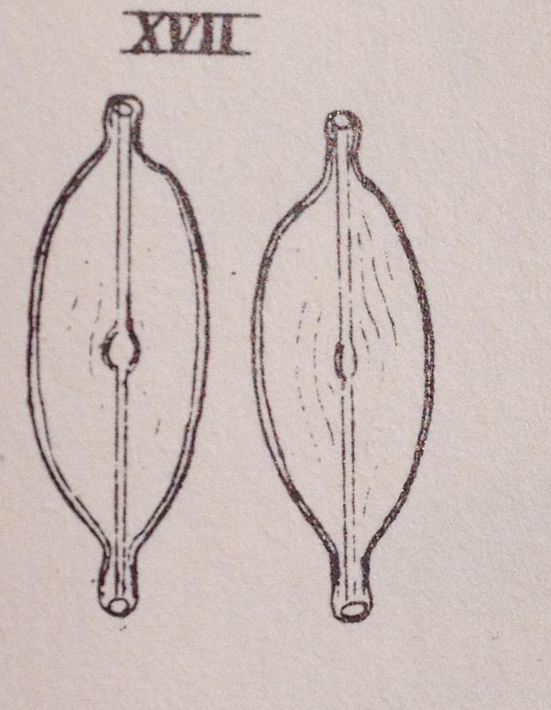 N  Sphaerophora Orig Image  Best