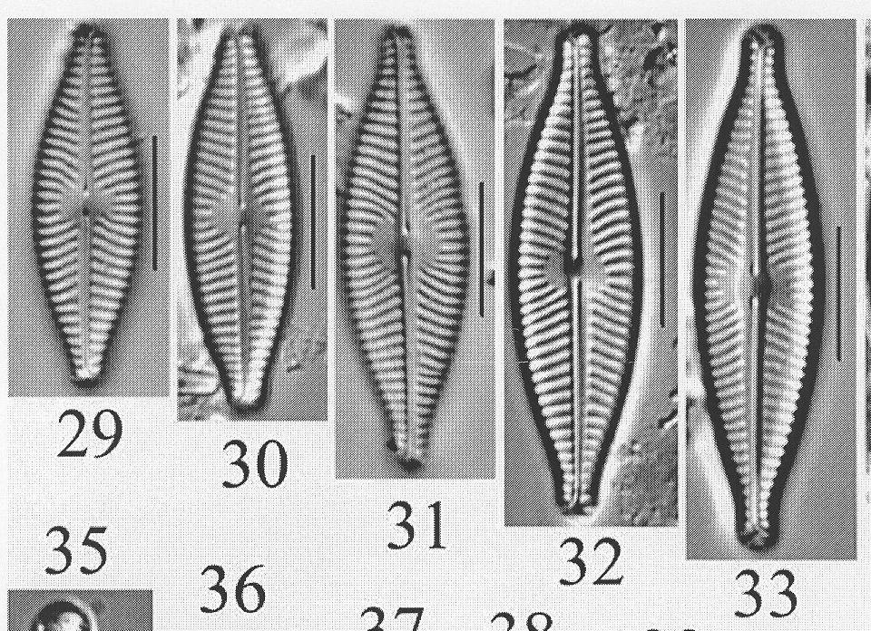 Ncaroliniae Origimag1