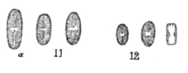 Satomoides Orig Drawings