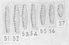 Sovereign 1958  Plate  Iv Innominata
