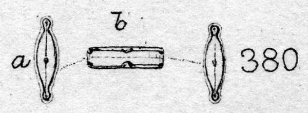 Brachysira microcephala orig illus